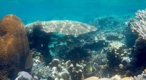 sensations voyage photos java karimunjawa islands snorkeling corail