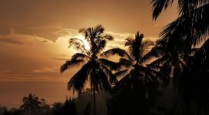 sensations voyage photos kawah ijen green-life-coconut trees sunset