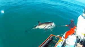 sensationsvoyage-afriquedusud-plongee-requin-requin-blanc-6