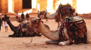 sensationsvoyage-sensations-voyage-jordanie-jordan-camels-chameaux-tresor-2