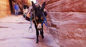 sensationsvoyage-sensations-voyage-jordanie-jordan-photos-petra-ane