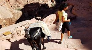 sensationsvoyage-sensations-voyage-jordanie-jordan-photos-william-donkey