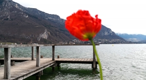 sensationsvoyage-sensations-voyage-photo-photos-france-annecy-lac-green-landscape-coquelicot
