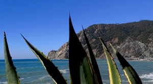 sensationsvoyage-sensations-voyage-photo-photos-italie-cinque-terre-cactus