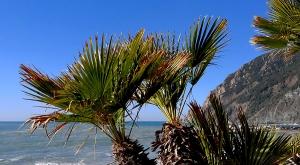 sensationsvoyage-sensations-voyage-photo-photos-italie-cinque-terre-palmiers