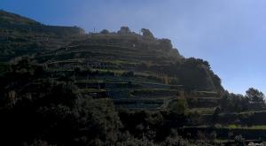 sensationsvoyage-sensations-voyage-photo-photos-italie-cinque-terre-vignes-vignobles