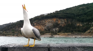 sensationsvoyage-sensations-voyage-photo-photos-italie-porto-venere-mouette