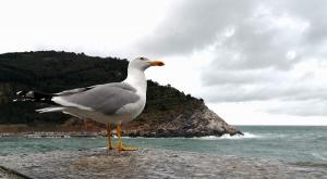 sensationsvoyage-sensations-voyage-photo-photos-italie-porto-venere-mouettes