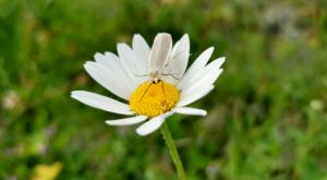 sensationsvoyage-sensations-voyage-photo-photos-zermatt-fleur