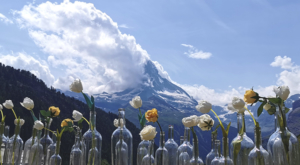 sensationsvoyage-sensations-voyage-photo-photos-zermatt-matterhorn-mont-cervin-suisse-switerland-flowers