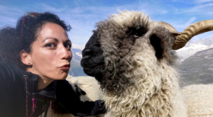 sensationsvoyage-sensations-voyage-photo-photos-zermatt-suisse--switzerland-black-nose-sheep-valais-5
