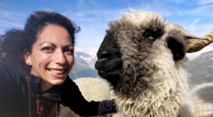 sensationsvoyage-sensations-voyage-photo-photos-zermatt-suisse--switzerland-black-nose-sheep-valais-6