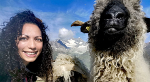 sensationsvoyage-sensations-voyage-photo-photos-zermatt-suisse--switzerland-black-nose-sheep-valais