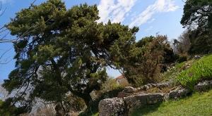 sensationsvoyage-sensations-voyage-photo-suisse-geneve-jardin-botanique-arbre