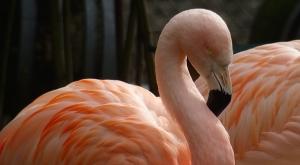 sensationsvoyage-sensations-voyage-photo-suisse-geneve-jardin-botanique-flamant-rose-flamingo