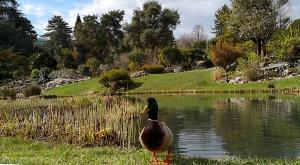 sensationsvoyage-sensations-voyage-photo-suisse-geneve-jardin-botanique-landscape-duck