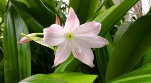 sensationsvoyage-sensations-voyage-photo-suisse-geneve-jardin-botanique-magnolia-fleur