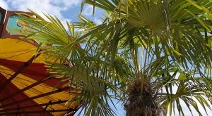 sensationsvoyage-sensations-voyage-photo-suisse-geneve-jardin-botanique-palmier