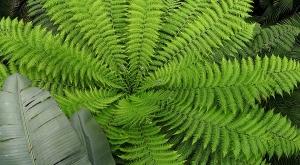 sensationsvoyage-sensations-voyage-photo-suisse-geneve-jardin-botanique-palmiers