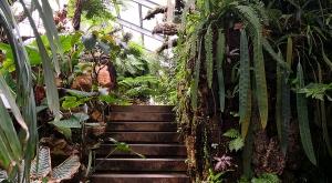 sensationsvoyage-sensations-voyage-photo-suisse-geneve-jardin-botanique-serre-tropicale
