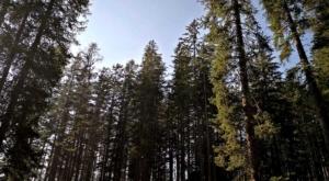 sensationsvoyage-sensations-voyage-suisse-grands-arbres