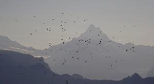 sensationsvoyage-sensations-voyage-suisse-montagne-niederhorn-vol-birds