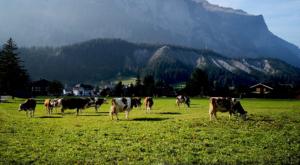 sensationsvoyage-sensations-voyage-suisse-montagne-vaches-alpages-swiss-alps-oeaschinen