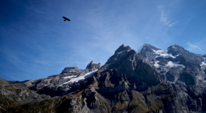 sensationsvoyage-sensations-voyage-suisse-niederhorn-landscape-bird-fly-freedom