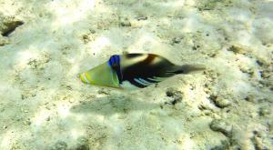 sensationsvoyage-voyage-sri-lanka-maldives-snorkeling-addu-atoll