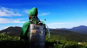 sensationsvoyage-voyage-sri-lanka-nuwara-eliya-tea-plantation-engrais