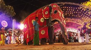 sensationsvoyage-voyage-sri-lanka-photo-elephants-katragama-perahera-bon-plan