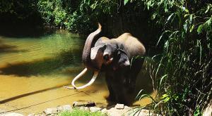 sensationsvoyage-voyage-sri-lanka-photo-millenium-elephant-dilawenna