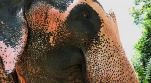 sensationsvoyage-voyage-sri-lanka-photo-millenium-elephant-foundation-é