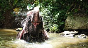 sensationsvoyage-voyage-sri-lanka-photo-millenium-elephant-foundation-3