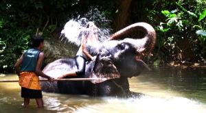 sensationsvoyage-voyage-sri-lanka-photo-millenium-elephant-foundation-shower
