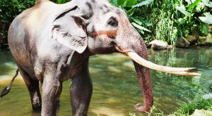 sensationsvoyage-voyage-sri-lanka-photo-millenium-elephant-foundation