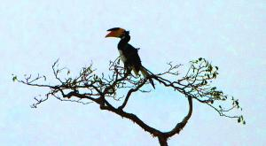 sensationsvoyage-voyage-sri-lanka-photos-bird-toucan-safari-yala