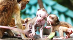 sensationsvoyage-voyage-sri-lanka-photos-singe-monkey-baby
