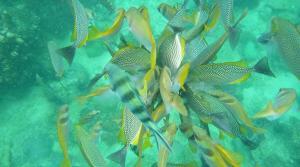 sensationsvoyage-voyage-thailande-koh-samui-snorkeling