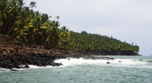 sensationsvoyage-voyages-destination-photos-guyane-coconuttrees-salut