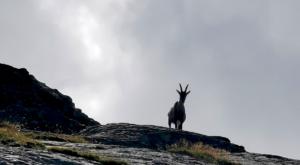 sensationsvoyage photos suisse riffelapls zermatt hike matterhorn bouquetin
