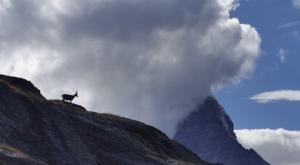 sensationsvoyage photos suisse riffelapls zermatt hike matterhorn bouquetin 3