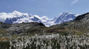 sensationsvoyage photos suisse riffelapls zermatt mont cervin matterhorn flowers 3