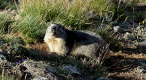 sensationsvoyage photos suisse riffelapls zermatt riffelsee weg marmotte