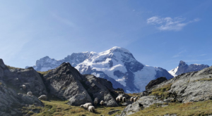 sensationsvoyage photos suisse riffelapls zermatt riffelsee weg sheep 3