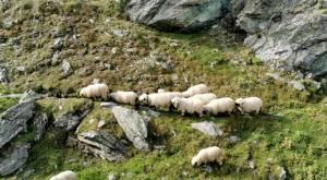 sensationsvoyage photos suisse riffelapls zermatt riffelsee weg sheeps